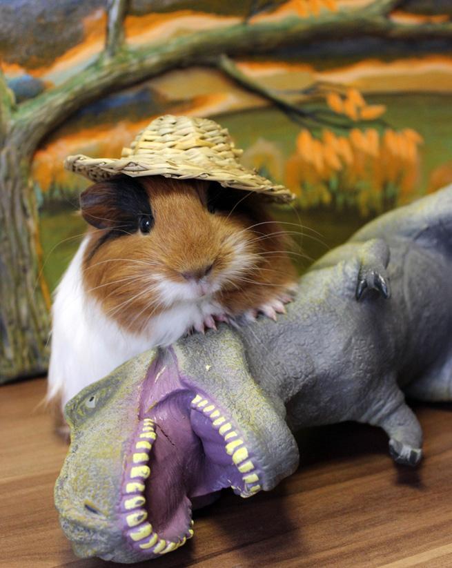 Lol a pet contest fourth week !